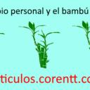 El cambio personal y el bambú japonés