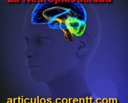 La neuroplasticidad