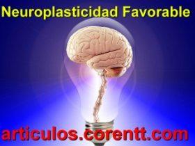 Cómo lograr la neuroplasticidad favorable